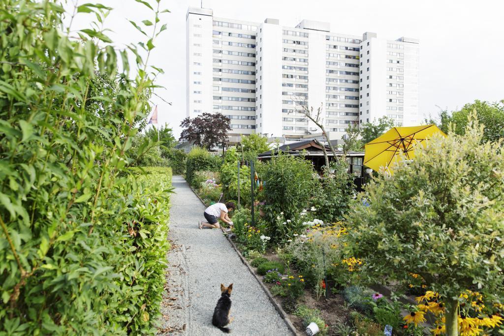 Gärtnerin in einem Frankfurter Kleingarten © Stefanie Kösling